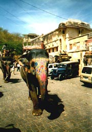 Elephants in Jaipur streets